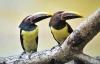Zwei neue Bewohner mit buntem Schnabel im Zoo Rostock