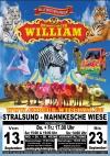 Circus William in Stralsund: 3 weisse Löwen, 2 weiße Tiger & 3 sibirische Tiger aus Eigener Zucht