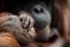Die Zoofotografen zeigen während der Sommerferien ihre Fotos im Zoo