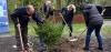 Baum des Jahres 2017 - eine Fichte fürs POLARIUM